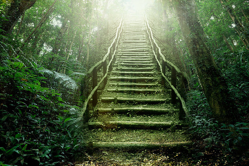 the-process-forest-stairs